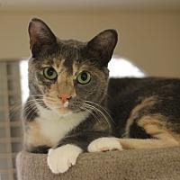 Adopt A Pet :: Sand-dollar - Richmond, VA