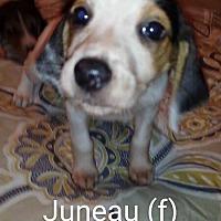 Adopt A Pet :: Juneau - Brunswick, ME