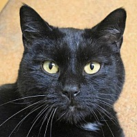 Adopt A Pet :: Silas - Norwalk, CT
