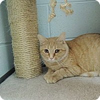 Adopt A Pet :: Ebee - House Springs, MO