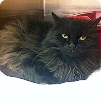 Adopt A Pet :: Boo - Pittstown, NJ