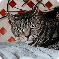 Adopt A Pet :: Zeke - Redondo Beach, CA