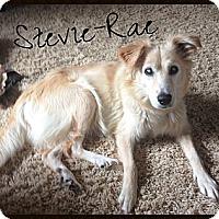 Adopt A Pet :: Stevie-Rae - Escondido, CA