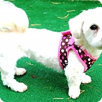 Adopt A Pet :: Joleen (Help needed) - Dover, MA