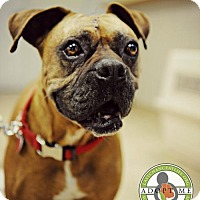 Adopt A Pet :: Latte - Oceanside, CA
