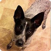Adopt A Pet :: Roscoe - Ogden, UT
