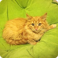 Adopt A Pet :: Zircon - Sterling Heights, MI