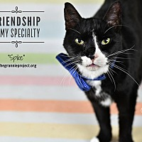 Adopt A Pet :: Spike - Wayne, PA