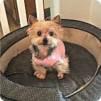 Adopt A Pet :: Chica - Fremont, CA