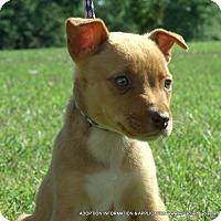 Adopt A Pet :: Hazel/ADOPTED - PRINCETON, KY