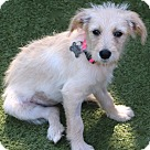 Adopt A Pet :: Puppies! Kirby,Blondie, Millie