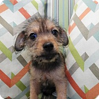 Adopt A Pet :: Topaz - Waco, TX