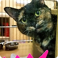 Adopt A Pet :: Patches - Worcester, MA