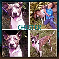 Adopt A Pet :: CHESTER - Moosup, CT