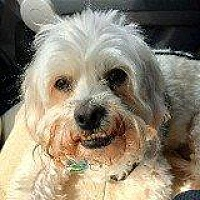 Adopt A Pet :: BRUNO - Hampton, VA