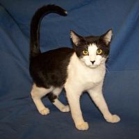 Adopt A Pet :: K-Fountain2-Jesse - Colorado Springs, CO