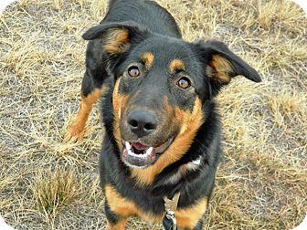German Shepherd Dog/Husky Mix Dog for adoption in Cheyenne, Wyoming - Tasha