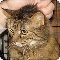 Adopt A Pet :: Tiffany - Chesapeake, VA
