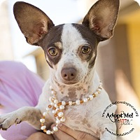 Adopt A Pet :: NICHOLAS - Inland Empire, CA