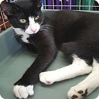 Adopt A Pet :: Felix - Raritan, NJ