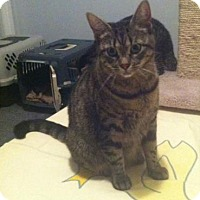 Adopt A Pet :: Riley - Blackstock, ON