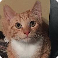Adopt A Pet :: Snap - Bensalem, PA