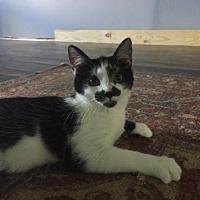 Adopt A Pet :: Mario - Plain City, OH