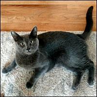 Adopt A Pet :: Raven - Colorado Springs, CO