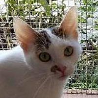 Adopt A Pet :: Cucumber - Cincinnati, OH