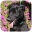 Photo 2 - Labrador Retriever Mix Dog for adoption in Chula Vista, California - Blackie