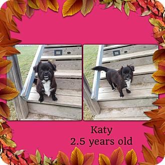 Pekingese Mix Dog for adoption in San Antonio, Texas - Katy