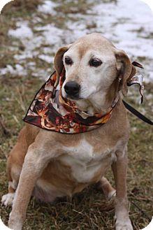 Labrador Retriever Mix Dog for adoption in Cranford, New Jersey - Lucy
