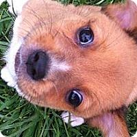 Adopt A Pet :: Angelo - Donaldsonville, LA