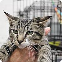 Adopt A Pet :: Andrew - Santa Monica, CA