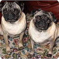 Adopt A Pet :: Mazie-NY - Edmeston, NY