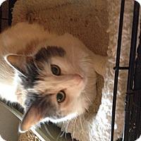 Adopt A Pet :: Vickie - Wenatchee, WA