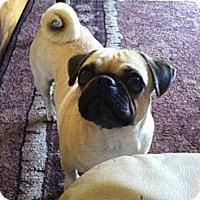 Adopt A Pet :: Lily - Eagle, ID