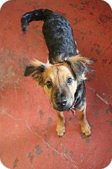 Spaniel (Unknown Type) Mix Dog for adoption in New Orleans, Louisiana - Penelope