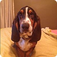 Adopt A Pet :: Henry - Northport, AL