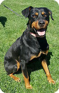 Rottweiler/Doberman Pinscher Mix Dog for adoption in Oakland, Michigan - Matilda
