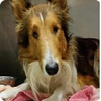 Adopt A Pet :: Sonny - COLUMBUS, OH