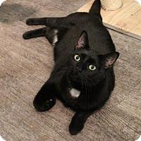 Adopt A Pet :: Solange - West Des Moines, IA