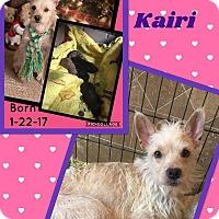 Adopt A Pet :: Kairi - Scottsdale, AZ