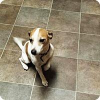 Adopt A Pet :: Buddy - Treton, ON