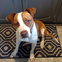 Adopt A Pet :: Zoey - Adoption Pending! - West Bloomfield, MI