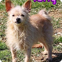 Adopt A Pet :: Taffy # 1108 - Nixa, MO
