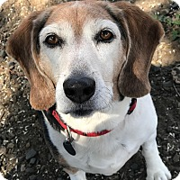 Adopt A Pet :: Rudy - The Dalles, OR