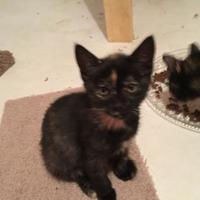 Adopt A Pet :: Starla - Owatonna, MN