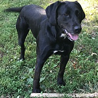 Adopt A Pet :: Kennedy - Washington DC, DC