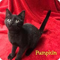 Adopt A Pet :: Pumpkin - Newport, NC
